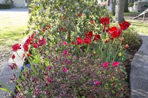 Various Flora
