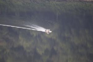 Tionesta Lake